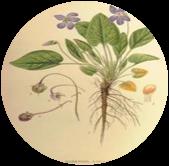 logo The Sibyl